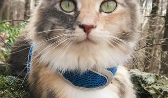 The Ultimate Guide to Picking out a Cat Harness