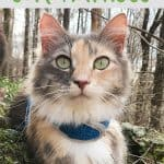 How to Pick Out a Cat Harness