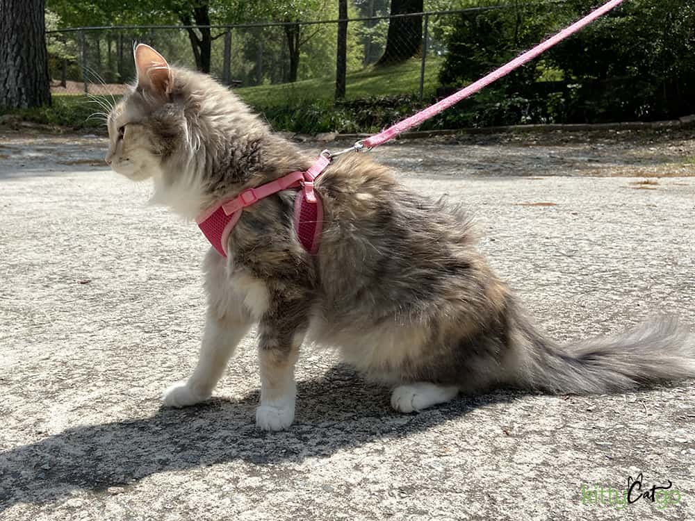 How to Pick Out a Cat Harness - cat in a step-in harness