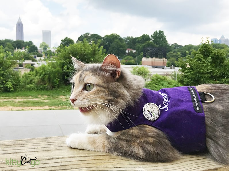 How to Pick Out a Cat Harness - cat in a walking jacket