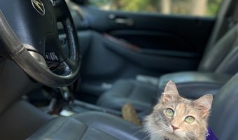 how to travel with your cat in a car