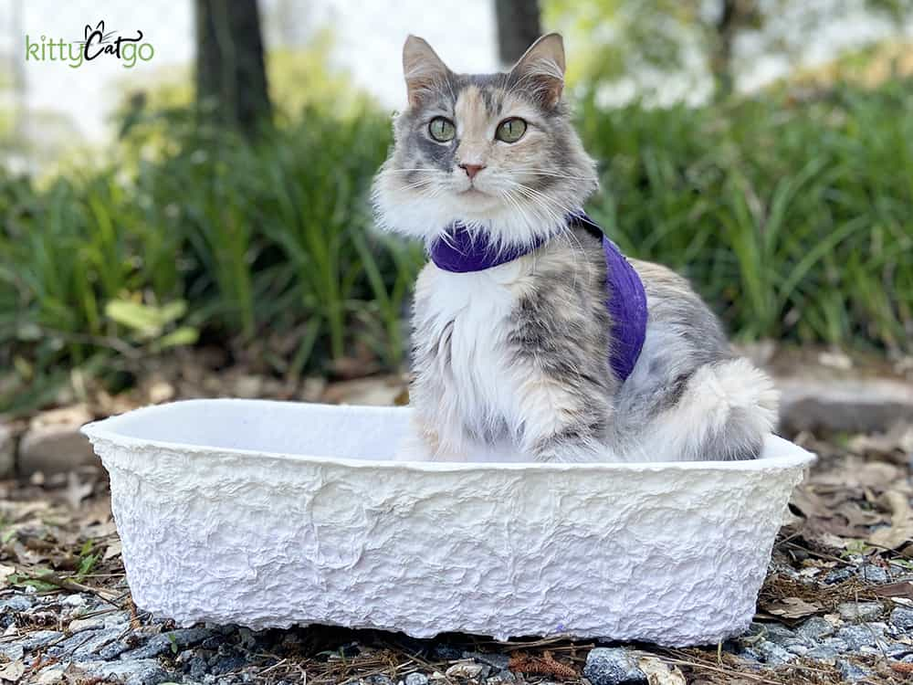 How to Travel with Your Cat in a Car - disposable litter box