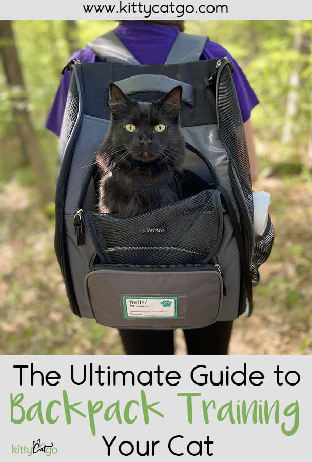 The Ultimate Guide to Backpack Training Your Cat