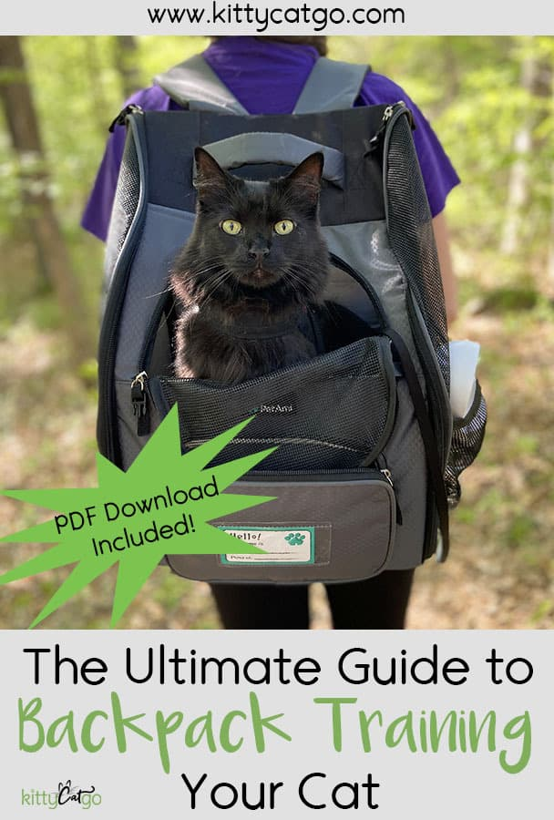 The Ultimate Guide to Backpack Training Your Cat - black cat in a cat backpack carrier