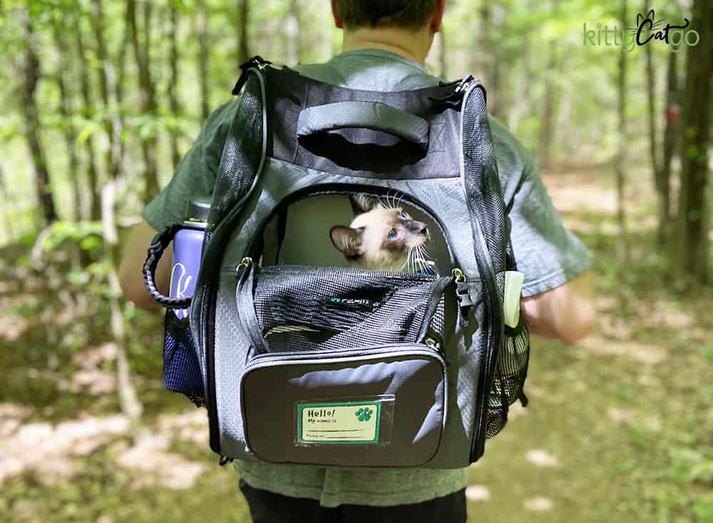 The Ultimate Guide to Backpack Training Your Cat - kitten in a backpack carrier
