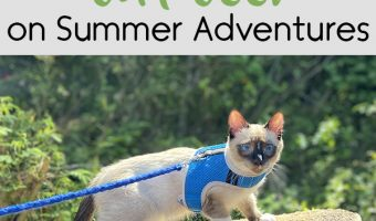 8 Ways to Keep Your Cat Cool on Summer Adventures