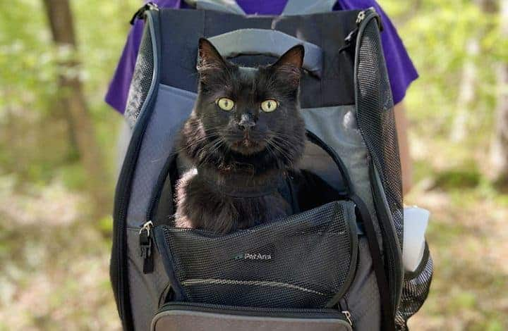 The Ultimate Guide to Backpack Training Your Cat - black cat in a backpack carrier