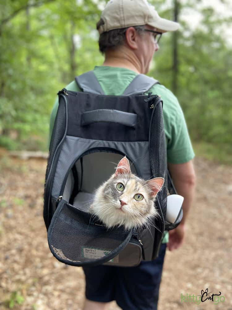 Adventure Cat riding in backpack carrier