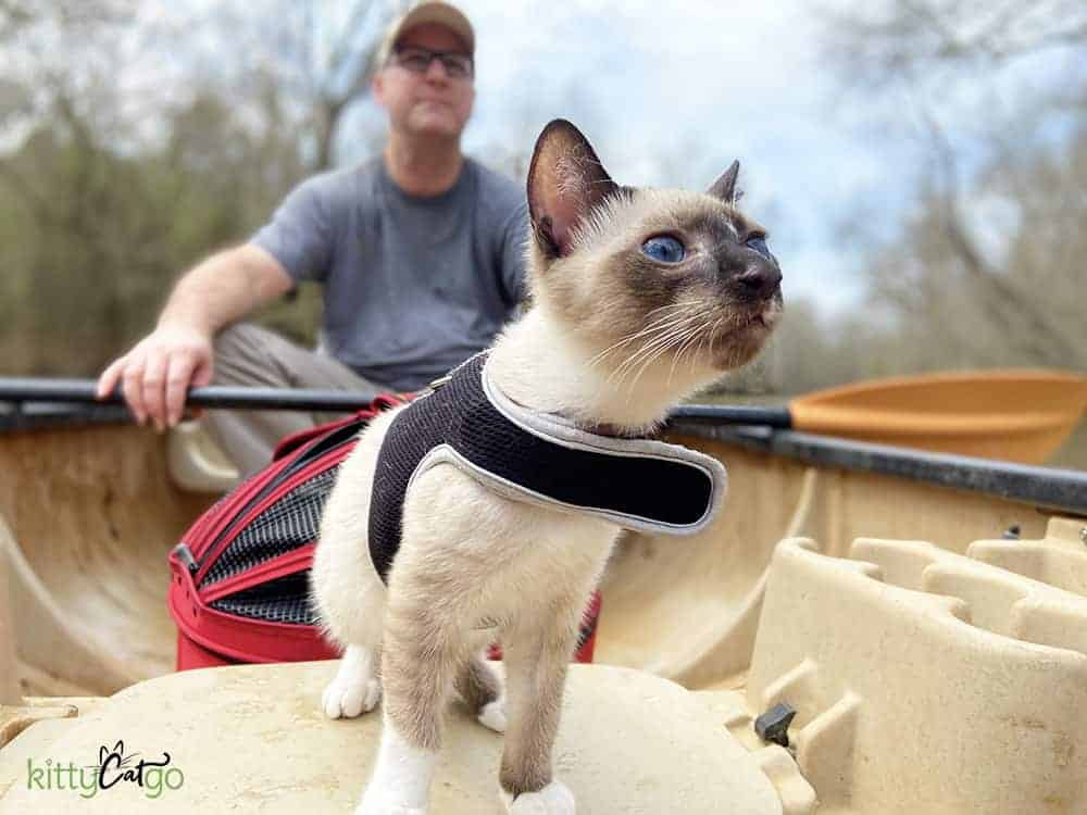 A siamese cat on a canoe