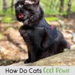 How Do Cats Cool Down When They Get Hot? Tips for Avoiding Overheating in Cats - Pinnable image with black cat panting.