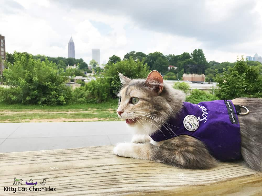 cat in a harness on the atlanta beltline