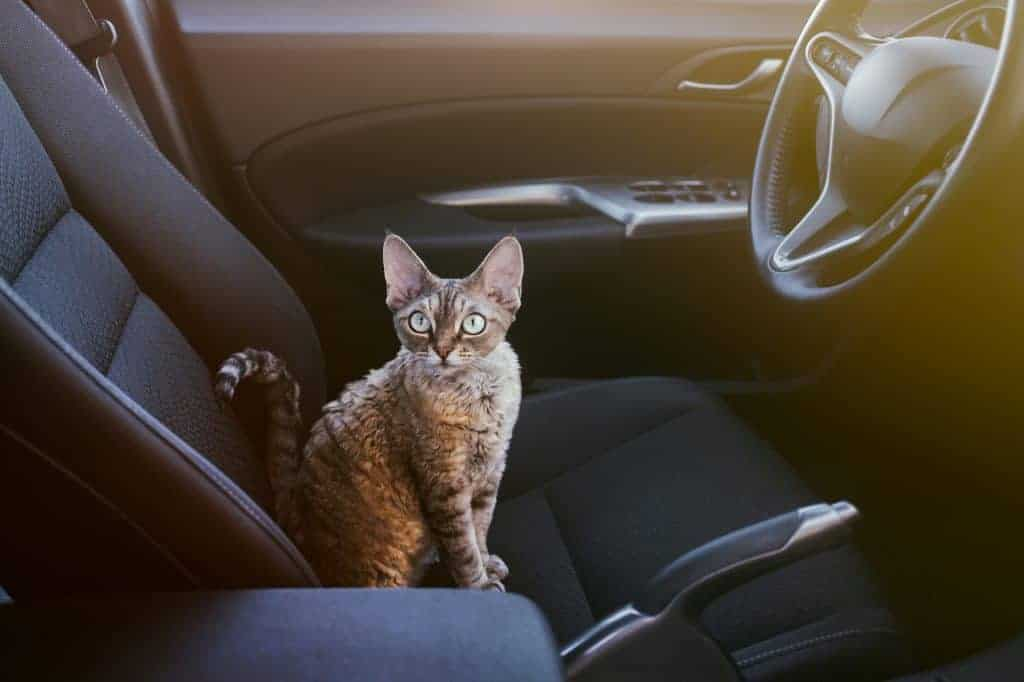 A cat sitting in the driver's seat of a car