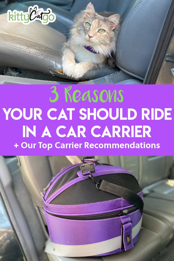 3 Reasons Your Cat Should Ride in a Car Carrier