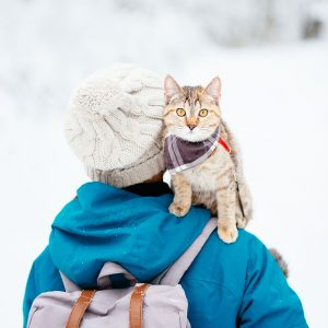 Winter Adventures with Your Cat: Safety, Gear, & More