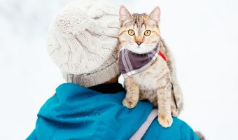 cat riding on human's shoulders in the snow