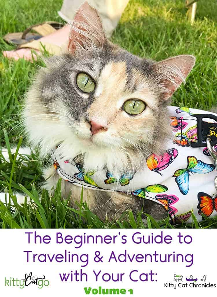 The Beginner's Guide to Traveling & Adventuring with Your Cat, ebook cover photo