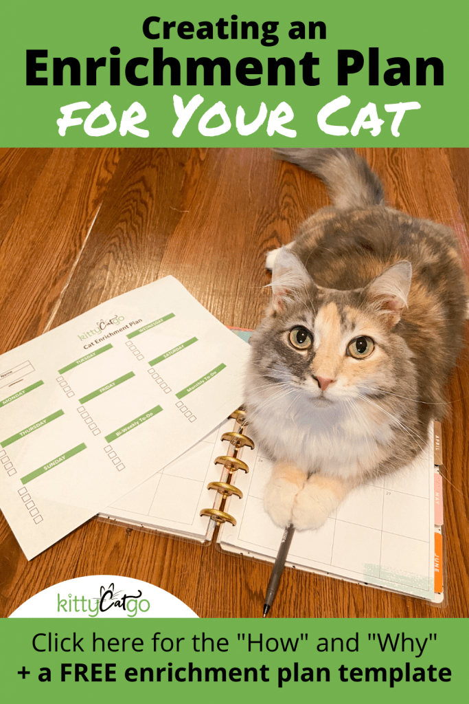 Creating an Enrichment Plan for Your Cat Pin - cat on a planner