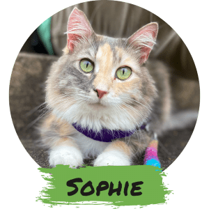 Sophie - The Social Butterfly