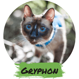 Gryphon - The Wild Child