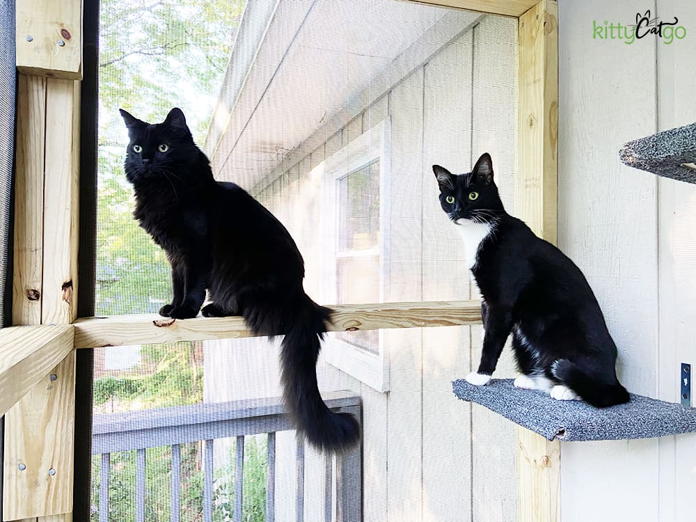 two cats on a screened in catio