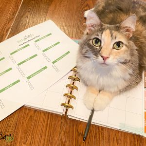 How to Create an Enrichment Plan for Your Cat