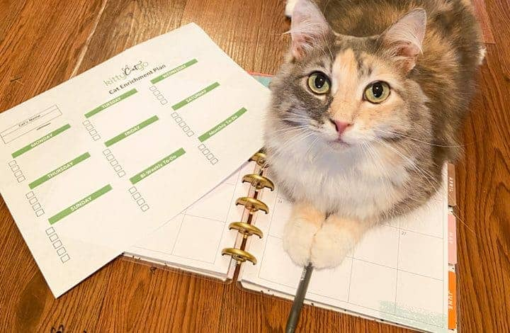 Creating a Cat Enrichment Plan - cat on a planner