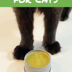 DIY Paw Balm for Cats - Pin Image