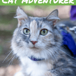 Pinnable Image: The Six Personality Traits of a Cat Adventurer
