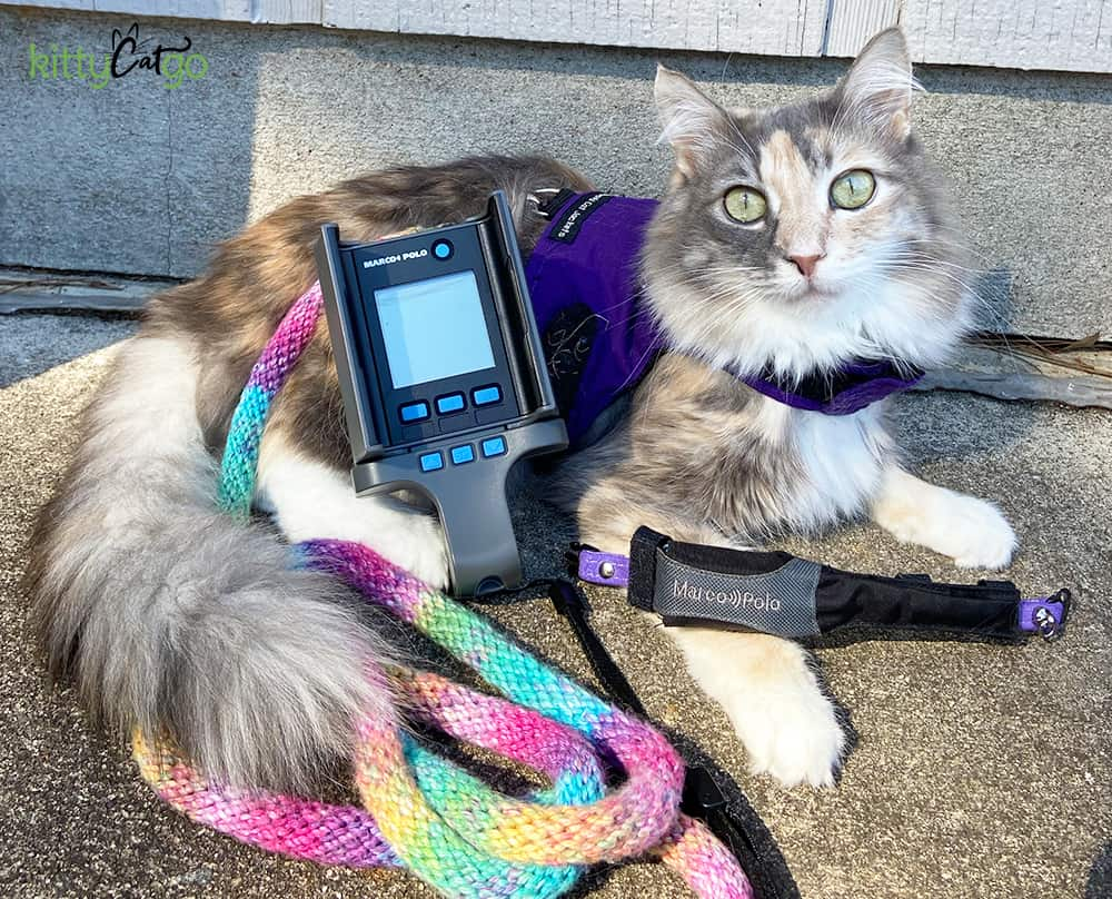 Cat posing with the Marco Polo Pet Tracking System