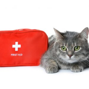 21 Essential Items for Your Cat First Aid Kit