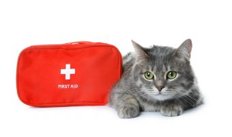 Gray Cat with Cat First Aid Kit