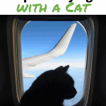 13 Tips for Flying with a Cat Pinnable Image