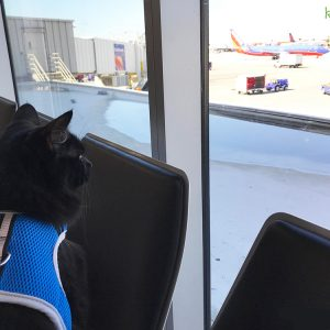13 Tips for Flying with a Cat In-Cabin