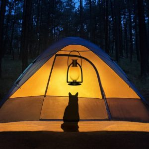 The Ultimate Guide to Camping with a Cat