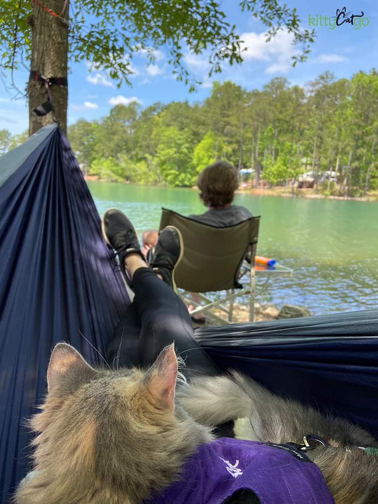 cat in a hammock overlooking a lake