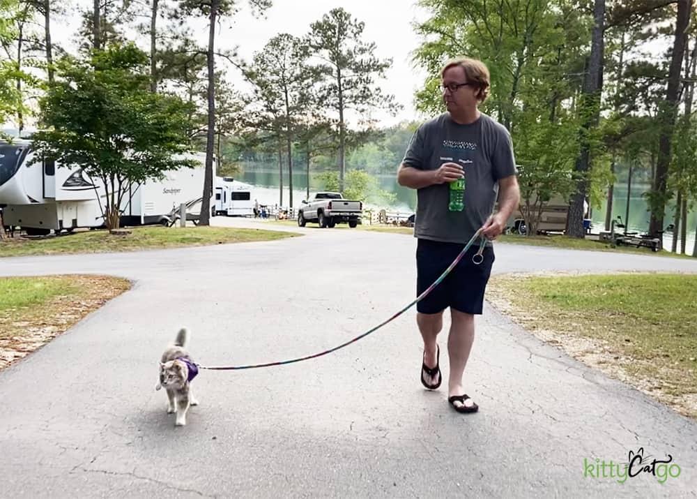 cat on leash walking around campground