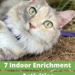 Pinnable Image - 7 Indoor Enrichment Activities for Your Cat