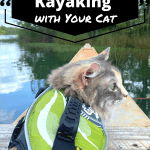 How to Go Kayaking with Your Cat Pinnable Image