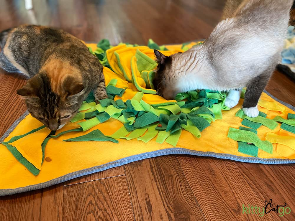 7 Indoor Enrichment Activities for Cats - two cats playing with Injoya Snuffle Mat