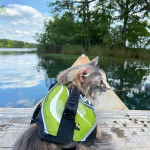 How to Go Kayaking with Your Cat