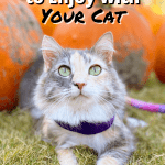 15 Fall Activities to Enjoy With Your Cat Pinnable Image - Cat at Pumpkin Patch