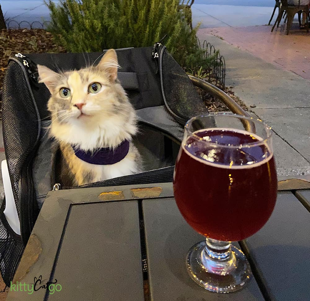 cat in a chair at a brewery