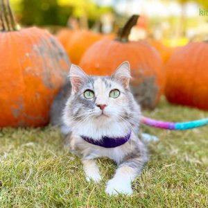 15 Fall Activities to Enjoy with Your Cat
